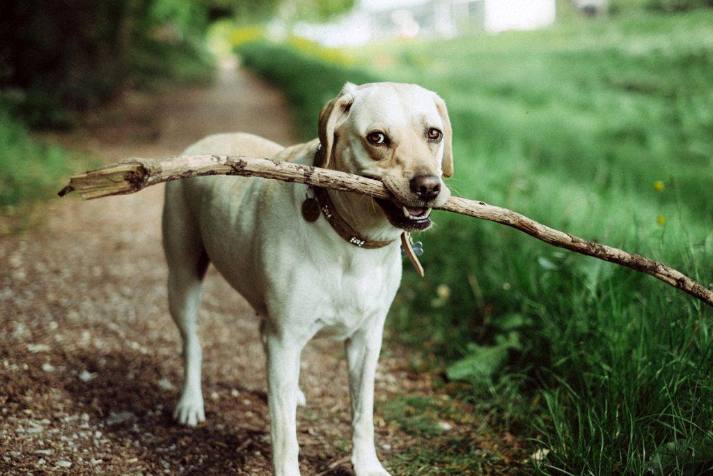 Beziehung Mensch-Hund